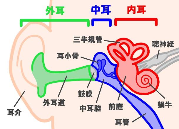 【イラストで解説】耳の仕組みと聞こえの仕組みって?わかりやすく解説します