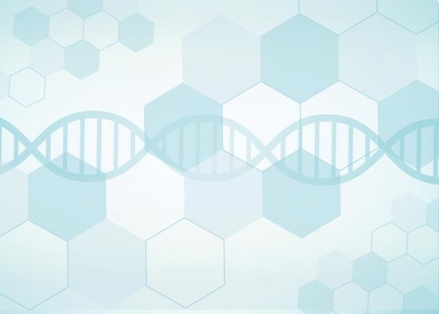 【News】有毛細胞の生成に密接に関係するタンパク質が発見される